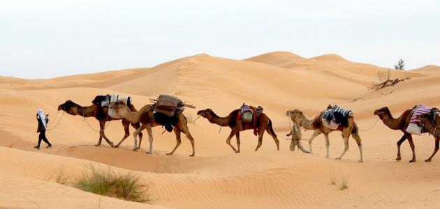 السياحة الصحراوية و أهميتها